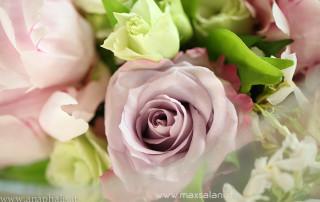 matrimonio_wedding_tema_angeli_lilla_anaphalis-77
